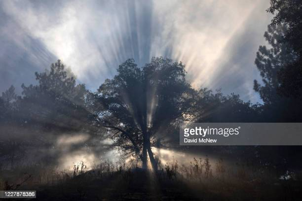 Sun rays filters through a smoky forest at the Apple Fire as an excessive heat warning continues on August 1, 2020 in Cherry Valley, California. The...