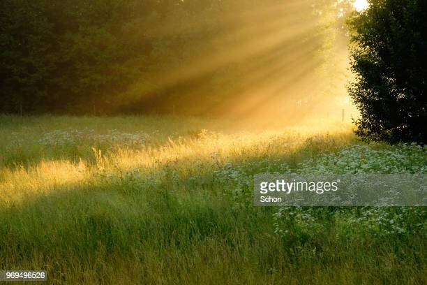 sun rays in fog over a meadow in the summer evening - idyllic stock-fotos und bilder