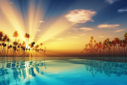 sun rays inside coconut palms 486121005