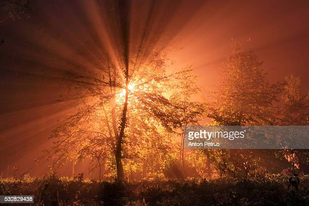 sun rays penetrating foggy autumn forest - anton petrus stock pictures, royalty-free photos & images