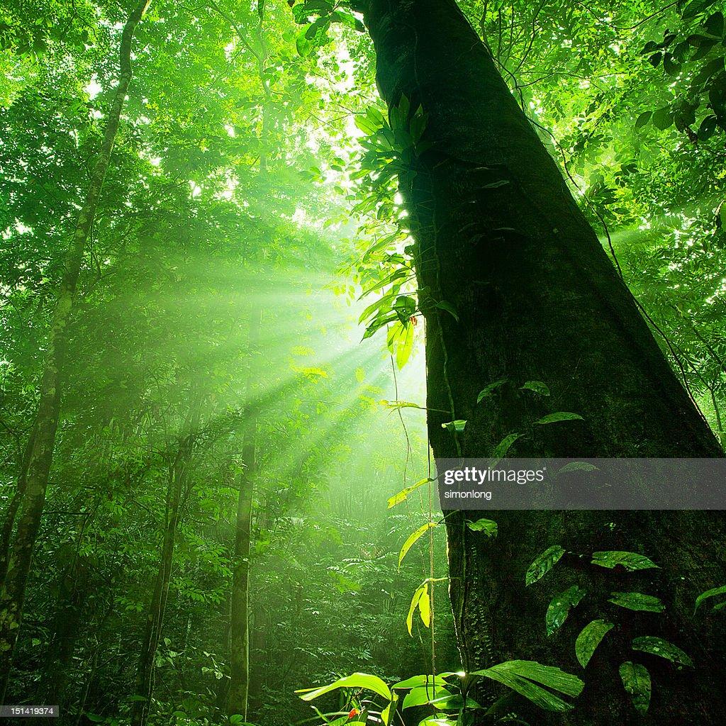 Sun rays : Stock Photo