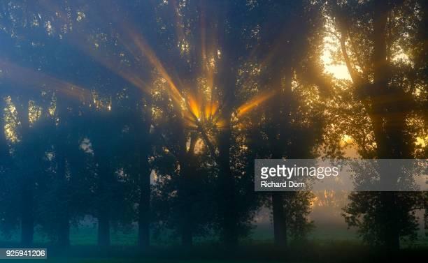 Sun rays shining through row of trees, Niederrhein, North Rhine-Westphalia