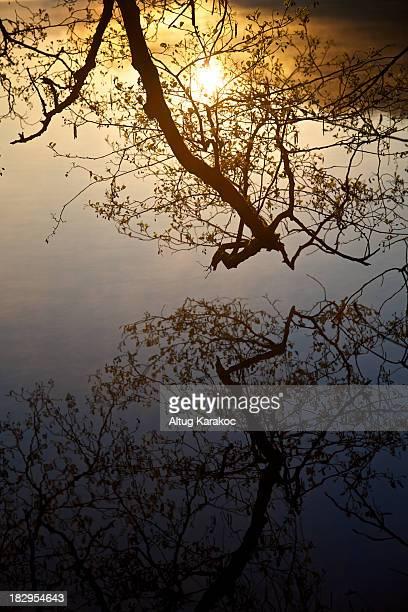 sun reflections - altug karakoc - fotografias e filmes do acervo