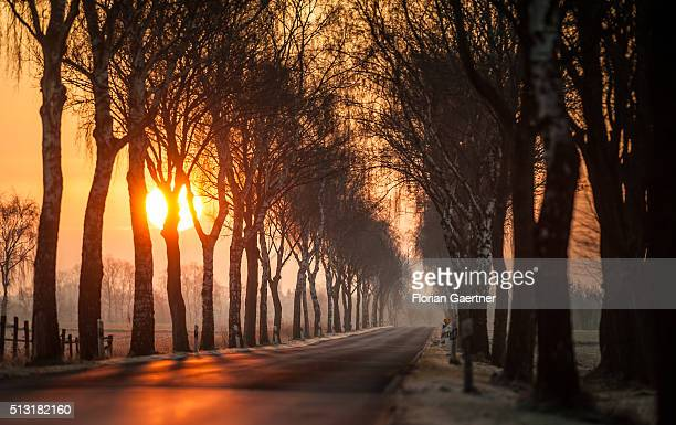 Sun rises in the morning of the meteorological beginning of spring on March 01 2016 in Hagen Germany
