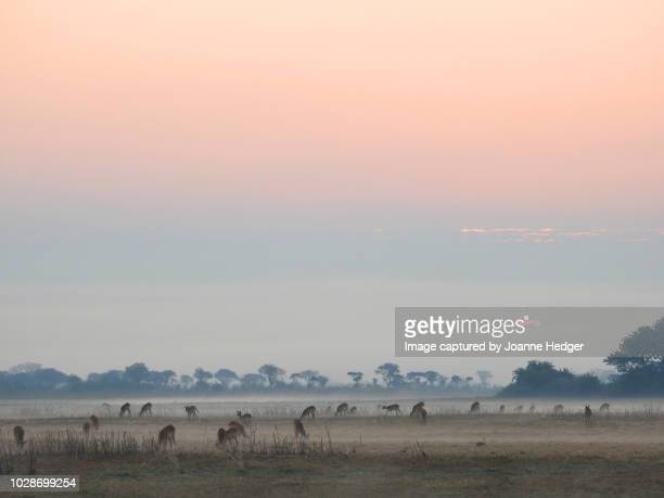 sun rises over the wetlands of the busanga plains in zambia - zambia stock pictures, royalty-free photos & images