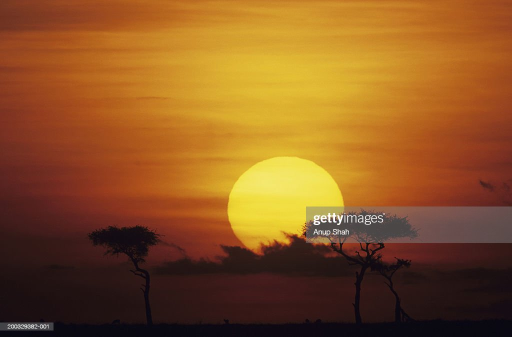 Sun rising over savannah, Masai Mara National Reserve, Kenya : Stock Photo