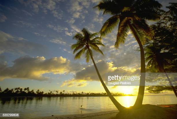 Sun Setting Between Palm Trees