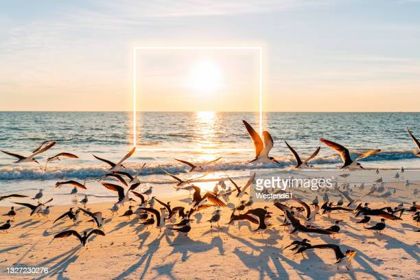 sun setting over flock of seagulls at lovers key state park beach with glowing square in background - florida us state stock pictures, royalty-free photos & images