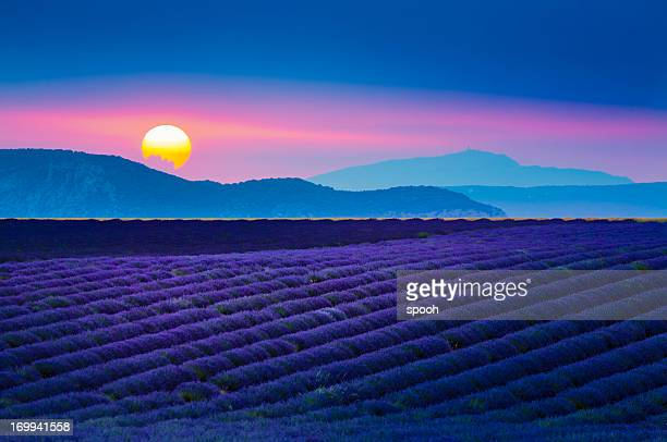 Sun setting over lavender field in Provence, France