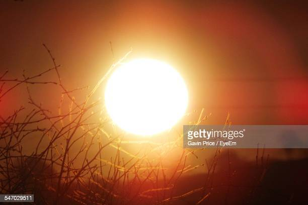 sun setting over trees - suns stock photos and pictures