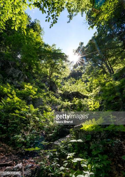Sun shines through leaves in the forest, Sagereckersteig, hiking trail from Salet to Kaerlingerhaus, Berchtesgaden National Park, Berchtesgadener Land, Upper Bavaria, Bavaria, Germany