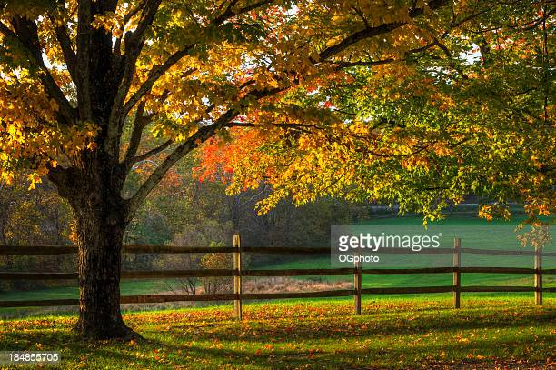 sun shining down on fenced in autumn colored trees - ogphoto stock photos and pictures