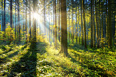 sun shining in a forest