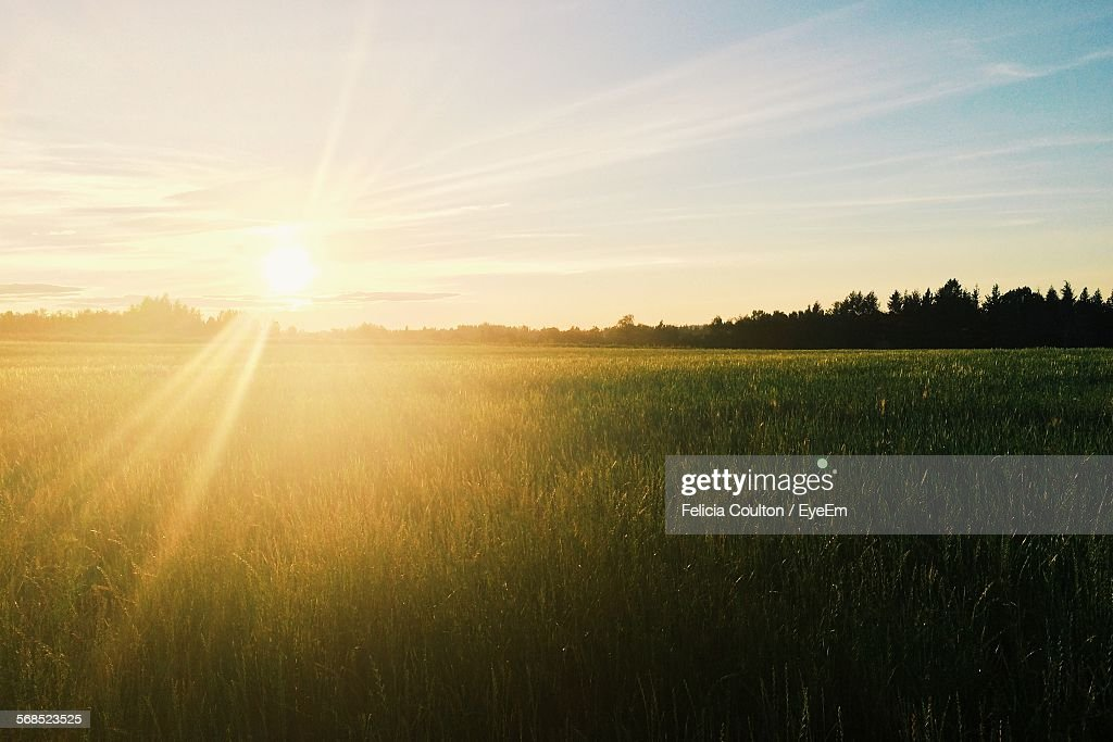 Sun Shining Over Wheat Field : Stock-Foto