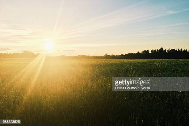 sun shining over wheat field - zonnestraal stockfoto's en -beelden
