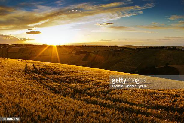 Sun Shining Over Wheat Fields