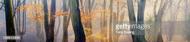 Sun shining through forest..