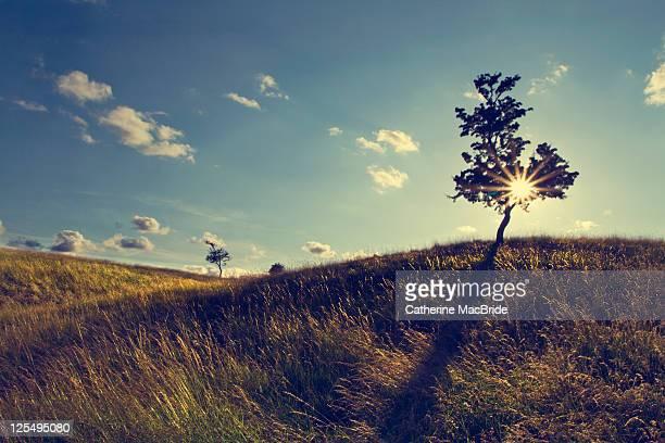 sun shining through tree in dublins phoenix park - catherine macbride stockfoto's en -beelden