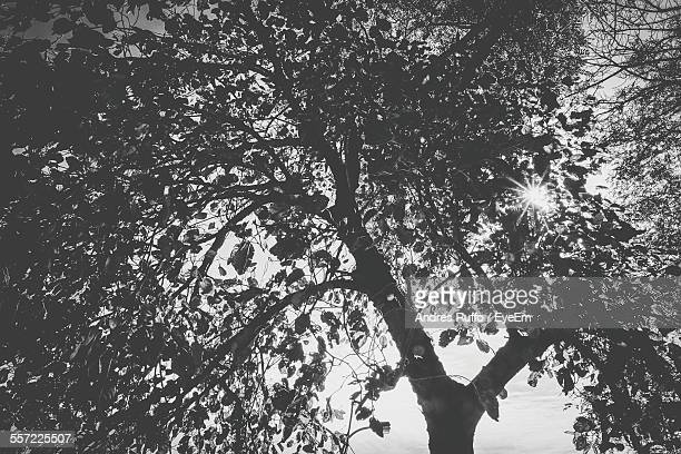 sun shining through tree - andres ruffo stock-fotos und bilder