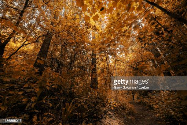 sun shining through trees in forest - northamptonshire stock pictures, royalty-free photos & images