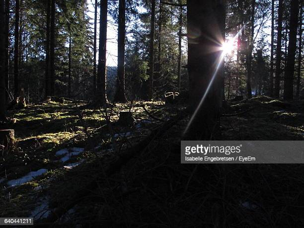 sun shining through trees in forest - isabelle foret photos et images de collection