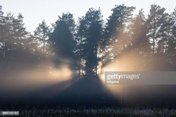 Zon schijnt door de bomen in de winter mistige dag