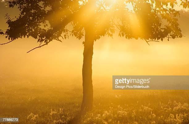 sun shining through trees - wasserform stock-fotos und bilder