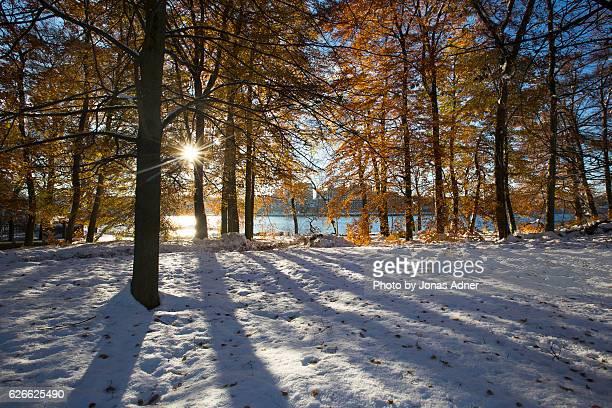 Sun through the golden leaves