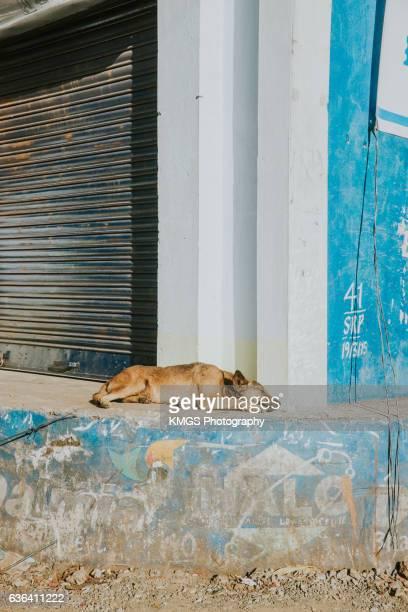 Sunbathing Dog on Indian Street
