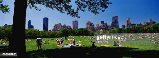 Sunbathing in Central Park