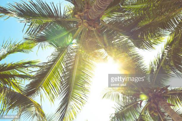 Sunbeam coming through palm tree leaves