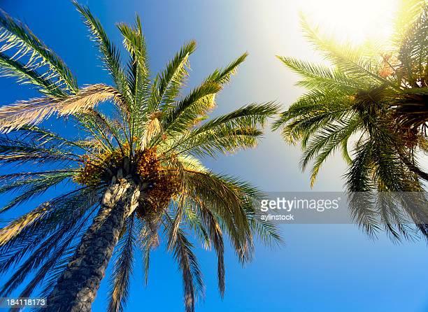 Sunbeam glaring through the palm trees
