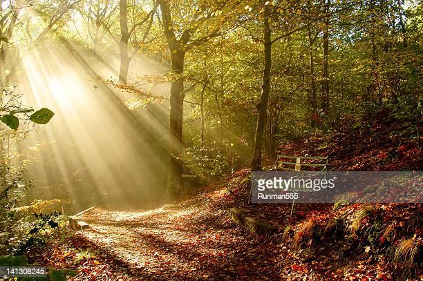 Sunbeam in trees