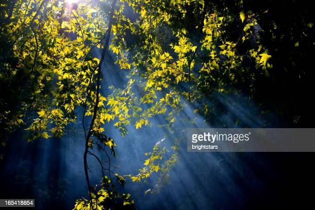 Sunbeam in woods