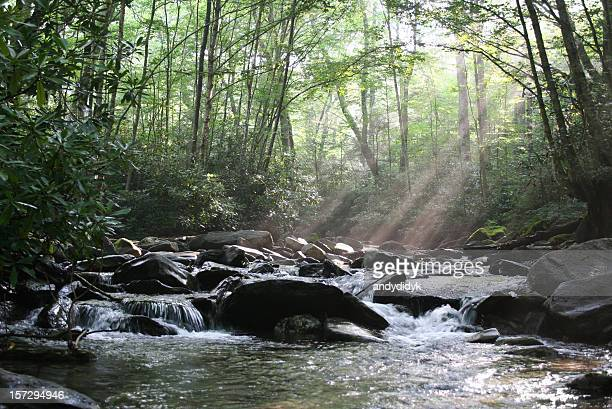 Sunbeam Morning Stream