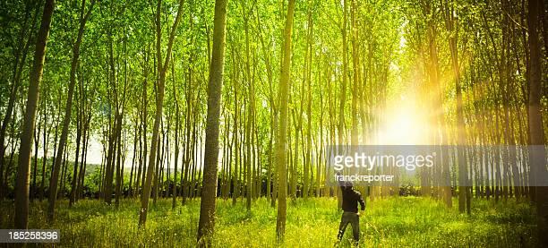 Sunbeam on green spring forest