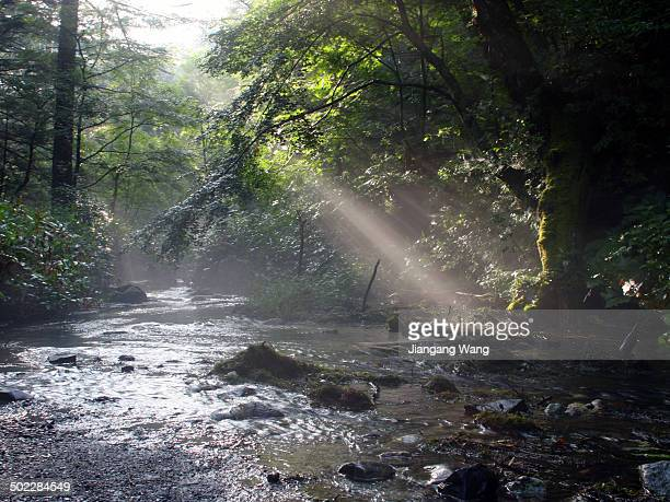 Sunbeam over Azusa River in the forest of Kamikochi Nagano Prefecture Japan