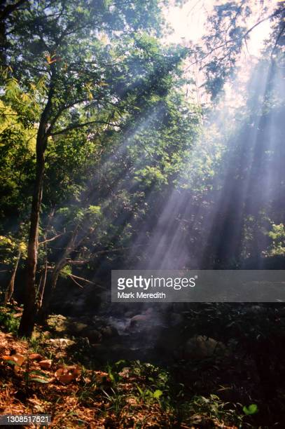 sunbeam - trinidad and tobago stock pictures, royalty-free photos & images