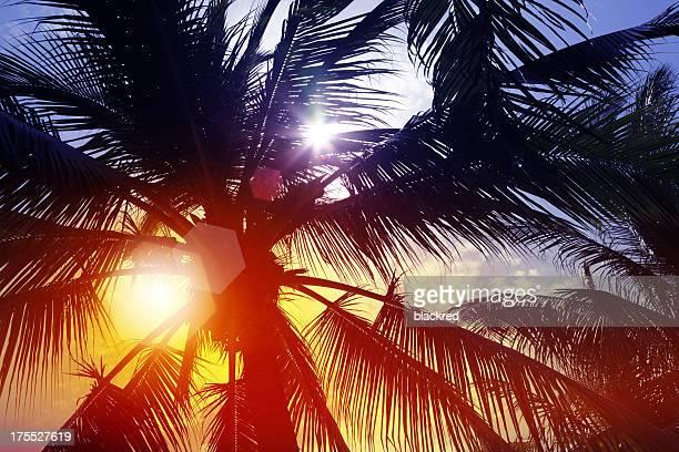 Sunbeam Through Palm Tree in Summer