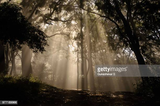 sunbeam through tree, nandi hills, karnataka, india - karnataka stock pictures, royalty-free photos & images