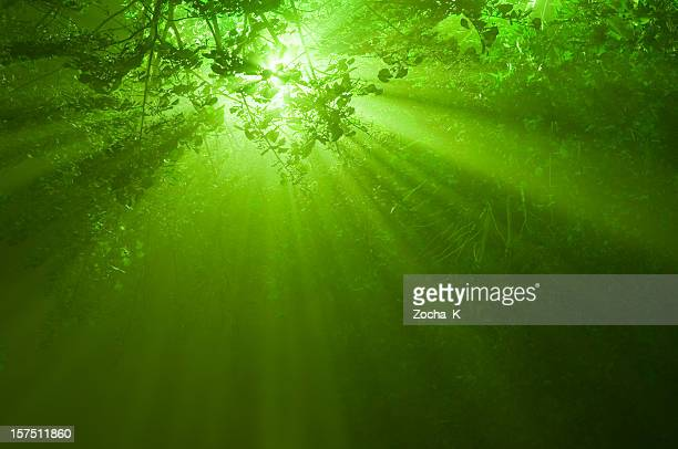 Sunbeams in mystical forest