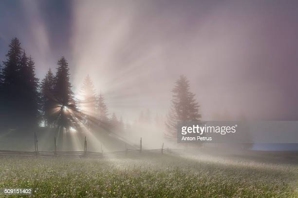sunbeams in the fog in forest - anton petrus stock pictures, royalty-free photos & images
