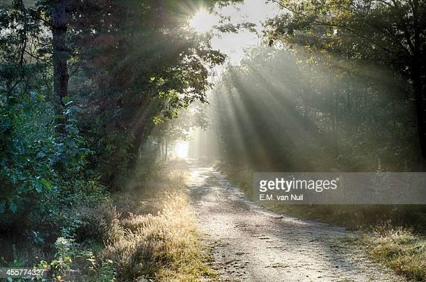 Sunbeams, part 1