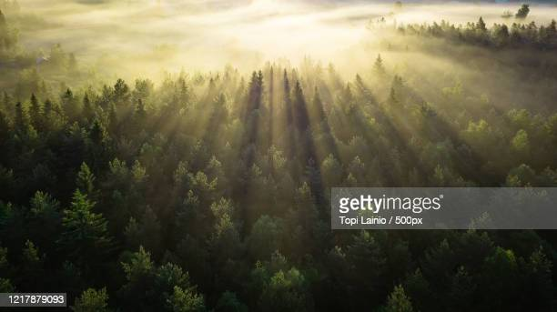 sunbeams shining above forest in fog at sunrise - finland stock pictures, royalty-free photos & images