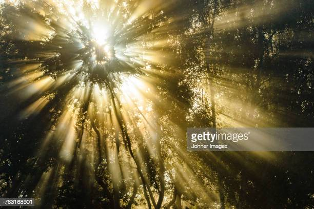 sunbeams shining through trees - spirituality stockfoto's en -beelden