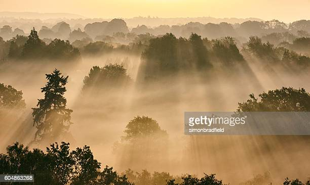 Sunbeams Through Misty Trees At Dawn