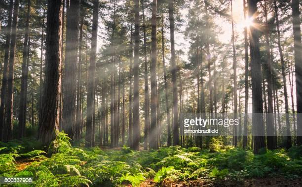 Zonnestralen door bomen