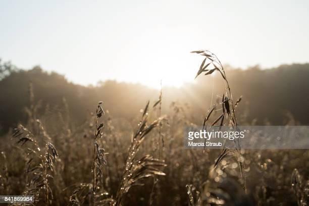 Sunburst in the  Morning in the Prairie