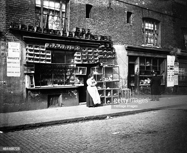 Sunday bird fair Sclater Street off Brick Lane London 1900s A bird seller standing outside a shop the wall of which is covered with cages full of...