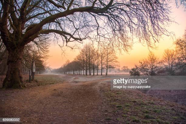 sunday morning in wanstead park - january stock pictures, royalty-free photos & images
